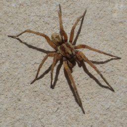 Уничтожение пауков в Киришах